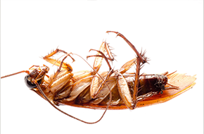 Roach Exterminating | Knockout Exterminating | San Diego, CA | (619) 434-6636